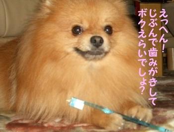 Hamigaki1