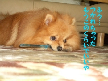 Hamigaki2_2