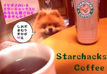 Starchacks_3
