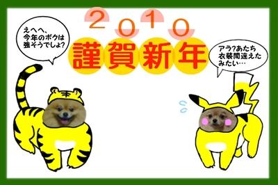 Torapika2010